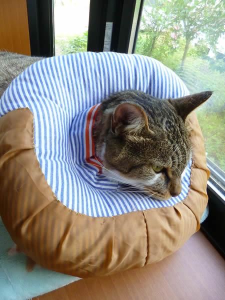 手作りの猫用エリザベスカラー