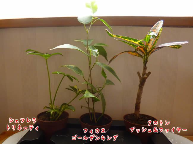 158円の観葉植物