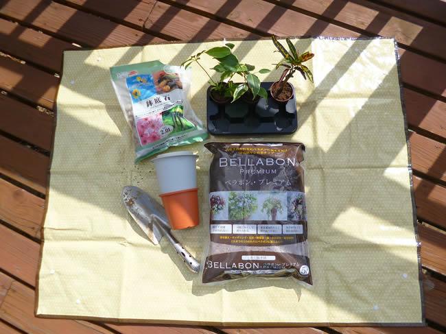 158円の観葉植物を育てるベラボンプレミアム